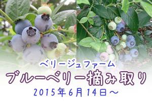 blueberry_201506